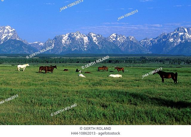 USA, Wyoming, Grand Teton national park, horses, p