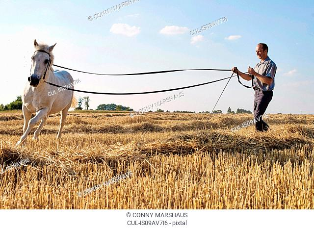 Man training cantering white horse in field