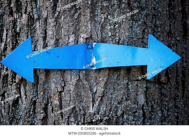 Tree trunk metal sign arrow direction blue