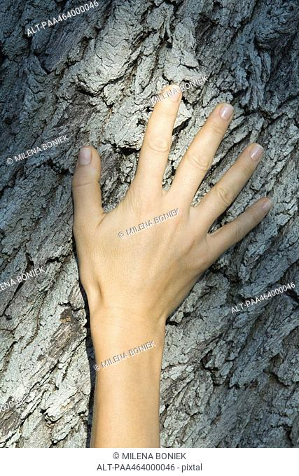 Woman's hand on tree trunk, close-up