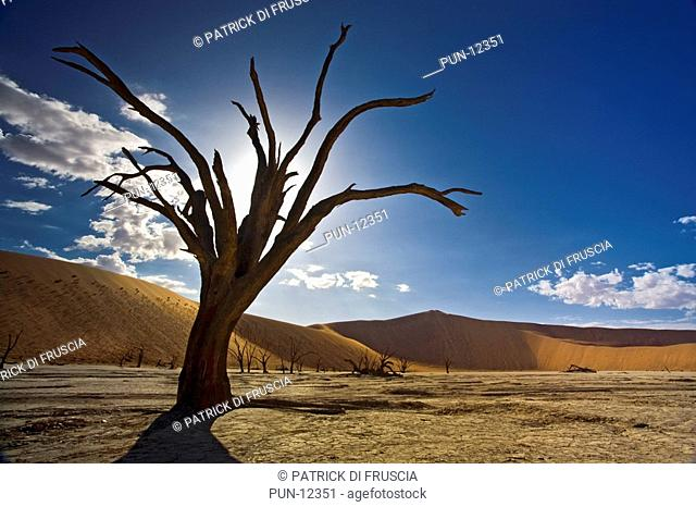 Landscape of a lonely dead tree surrounded by sand dunes in the magnificent Dead Vlei desert of Namibia, Africa