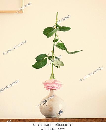 Still life with rose on ceramic vase