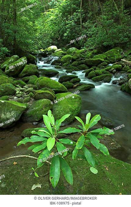 Roaring Fork river, Great Smokey Mountains National Park, North Carolina and Tennessee, USA
