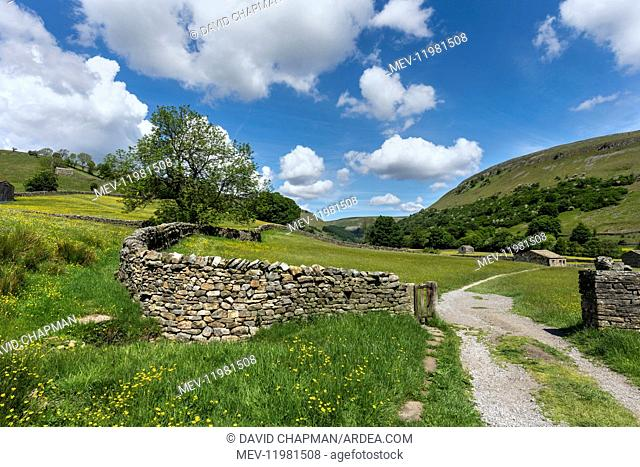 Path and Meadow - Muker - Swaledale - Yorkshire Dales - UK