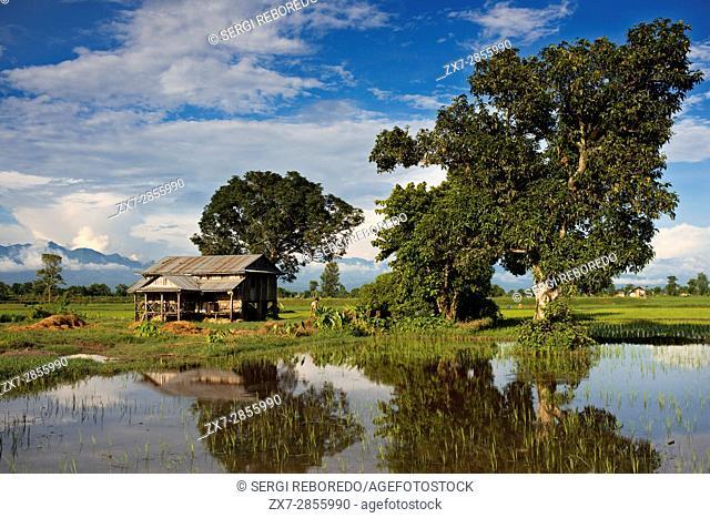 Rice fields around Bharatpur, Ratnanagar, Chitwan National Park, Nepal, Asia
