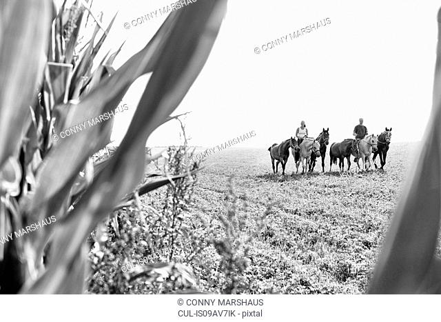 B&W image of man and woman riding and leading six horses in field