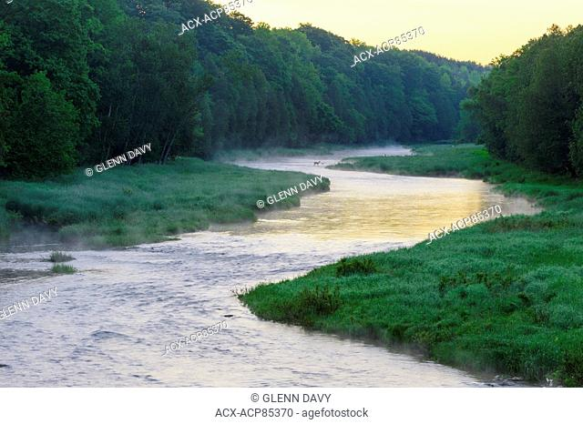 South Saugeen River with mist rising and Whitetail deer standing in river at dawn. Near Ayton, Ontario, Canada
