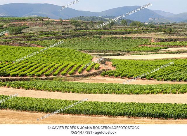 Vineyard near San Millán de la Cogolla , La Rioja, Spain