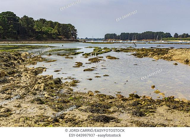 View of the Île de Berde at low tide of Morbihan, France