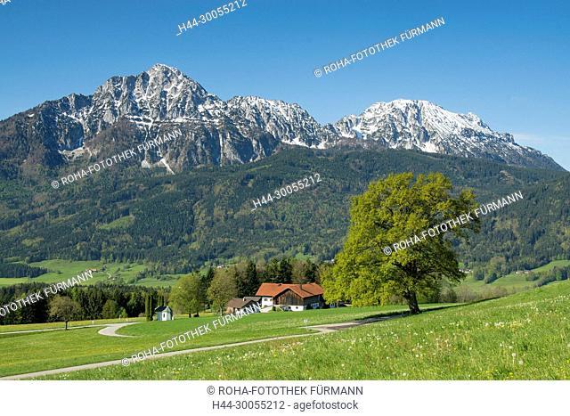 Berchtesgadener Land, Bayern, Rupertiwinkel, Anger, Högl, Hoegl, Reinbrecht, Frühling, Fruehjahr, verschneite Gipfel, Blumenwiese