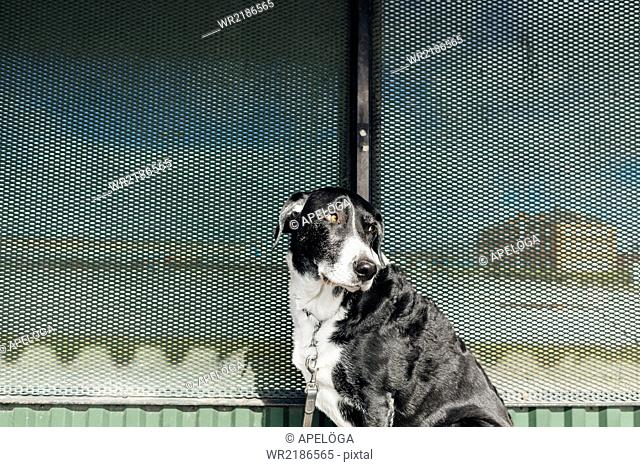 Mixed-breed dog looking away outdoors