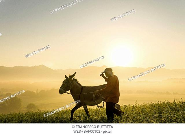 Italy, Tuscany, Borgo San Lorenzo, senior man walking with donkey in field at sunrise above rural landscape