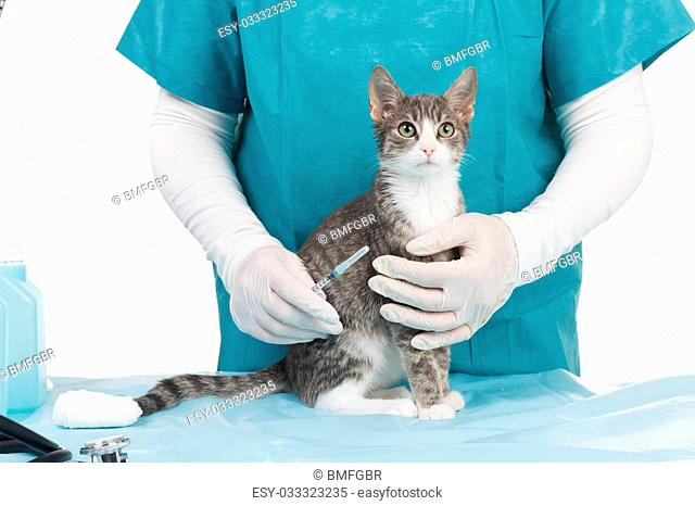 little grey tiger kitten at the doctors