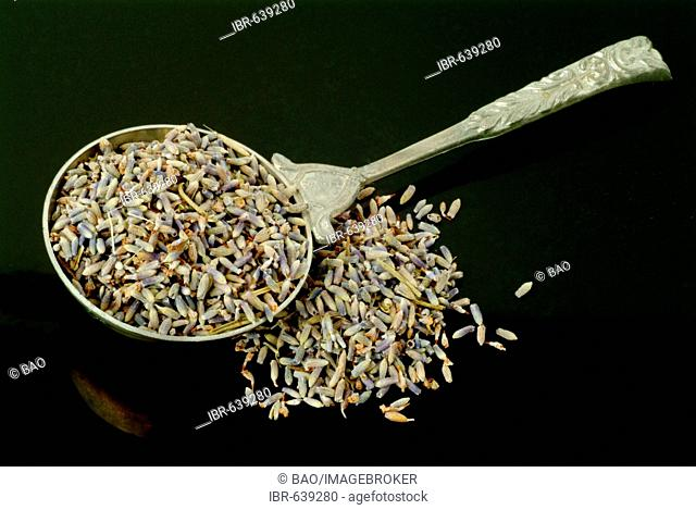 Dried lavender, lavender blossoms (Lavendula angustifolia), medicinal plant, spice, tea