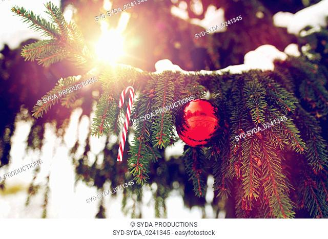 candy cane and christmas ball on fir tree branch