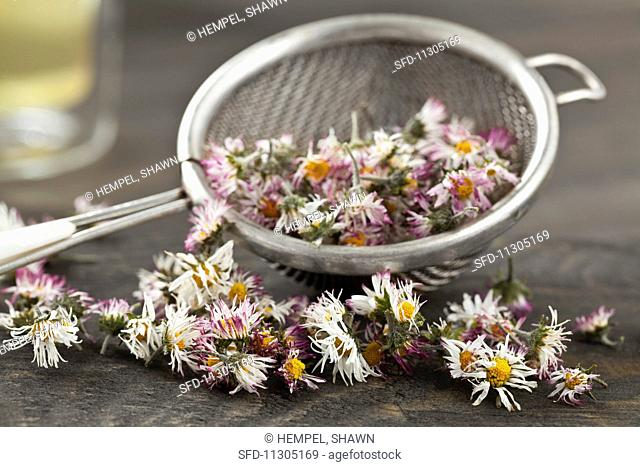 Dried daisies in a sieve for making daisy tea