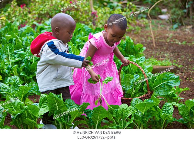 Young children in a cabbage patch, KwaZulu-Natal, South Africa