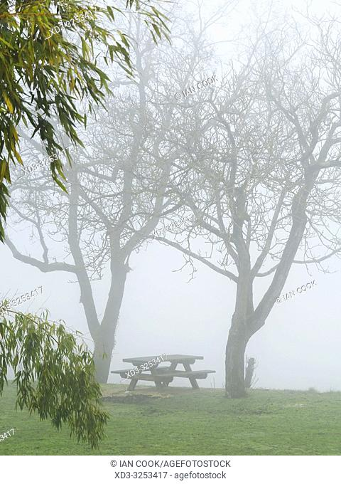picnic table and bare trees in fog, Tourtres, Lot-et-Garonne Department, Nouvelle Aquitaine, France