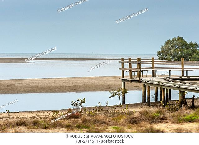 Old jetty at low tide on the edge of a mangrove swamp