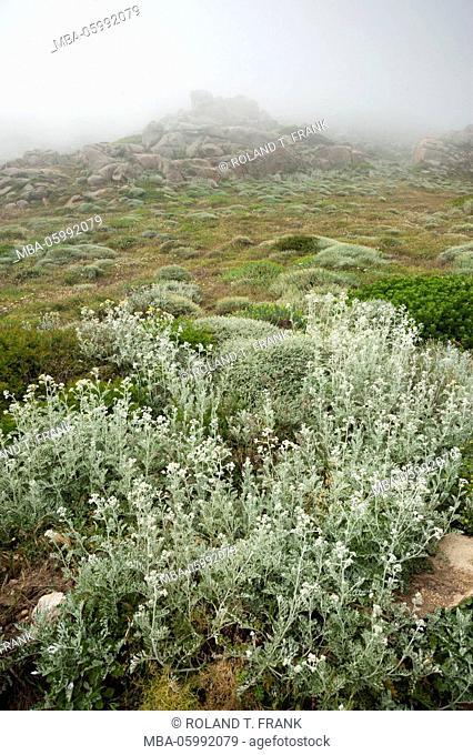 Italy, Sardinia, typical rocky landscape close Santa Teresa di Gallura with fog