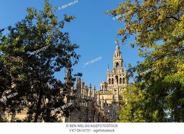 The Seville Cathedral, Seville, Andalusia, Spain