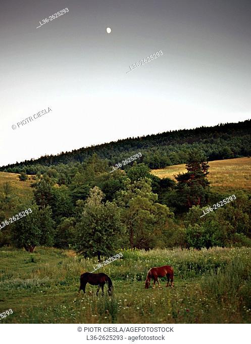 Bieszczady mountains. Horses grazing. Poland
