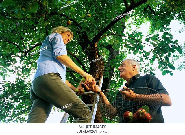 Mature woman handing man an apple, underview