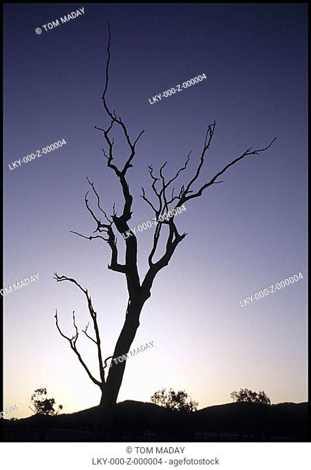 Tree in Australian Outback with sun fading in background