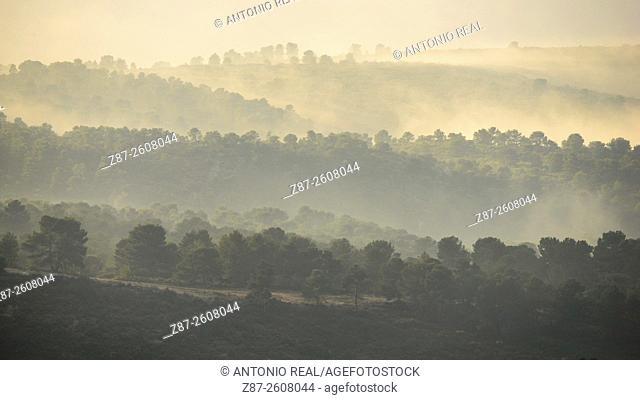 Pine trees and fog, Sierra de Almansa, Albacete province. Spain