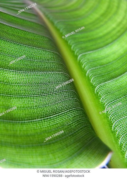 Macro photograph of detail of the leaf of a plant