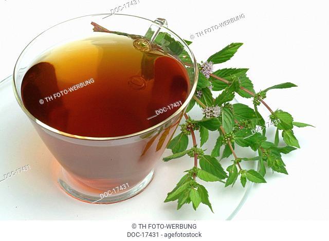 Peppermint - tea - KrŠutertee - herbtea - medicinal use - herb - medicinal plant - Pepperminttea - Mentha piperita - Menta piperina
