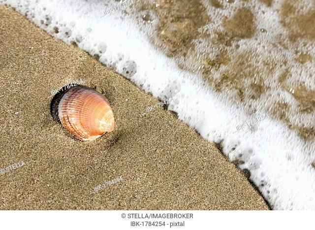 A shell in the sand on the beach