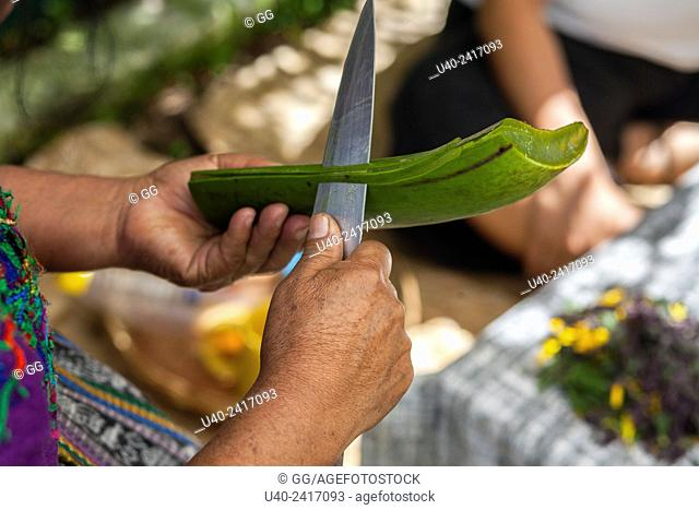 Guatemala, Mayan woman preparing Aloe Vera leaf
