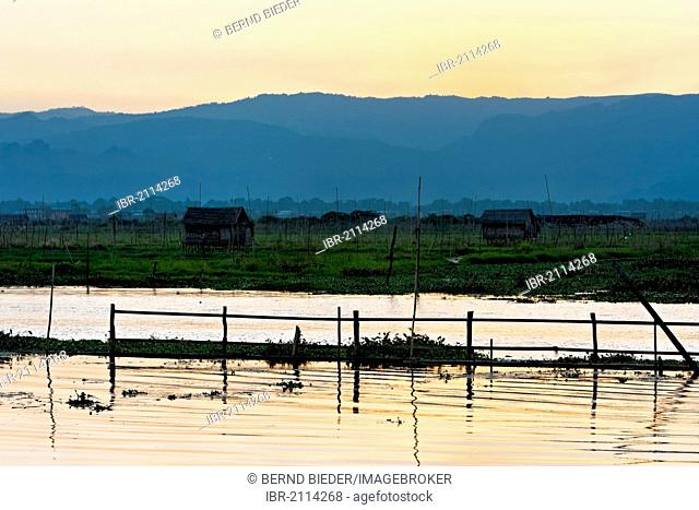 Evening mood, floating gardens, Inle Lake, Myanmar, Burma, Southeast Asia, Asia