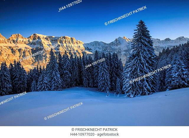 Alps, Alviergruppe, Alvier range, view, tree, mountain, mountain panorama, mountains, massif, trees, Churfirsten, rock, cliff, spruce, spruces, Flumserberge