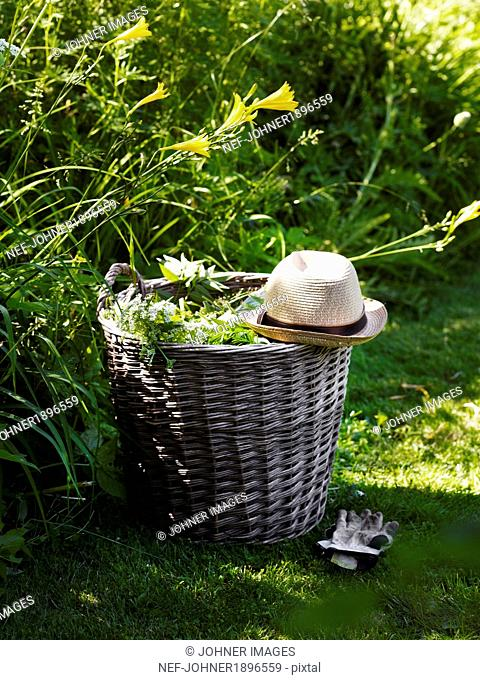 Weeds in basket with sun hat and gardening gloves