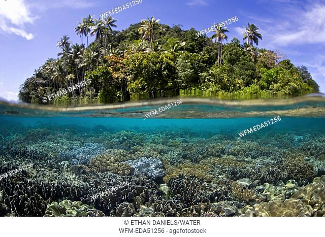 Corals grow in shallow Reef, Raja Ampat, West Papua, Indonesia
