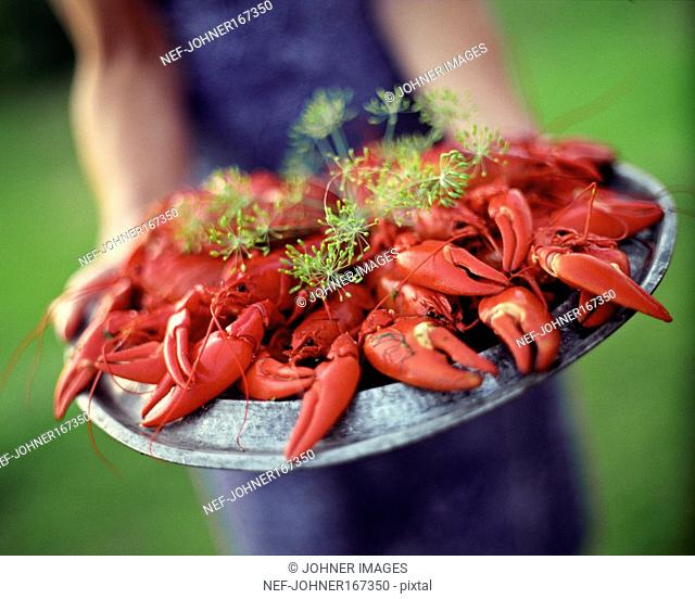 Crayfish for a Crayfish Party