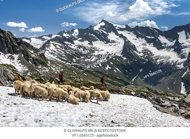 Aurina Valley, South Tyrol, Italy. Mountaineers in the rear Aurina Valley/Ahrntal. In the background the Picco dei Tre Signori/Dreiherrenspitze