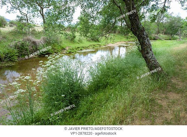 River vegetation along the path of the PRC-AV11 trail. River Corneja. Valley of the Crow. Avila. Castilla y León. Spain