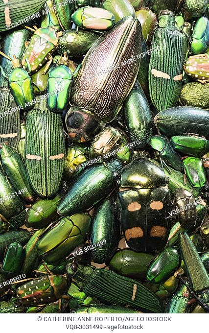 Close up of opulent emerald beetle costume exhibit at the Museum of Flanders, Cassel, France