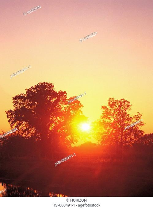 Environment & nature, Landscape, Sunset through trees, United Kingdom, England, Somerset