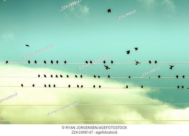 Black birds on a power wire coming and going in cords of lined music. The chorus of birds