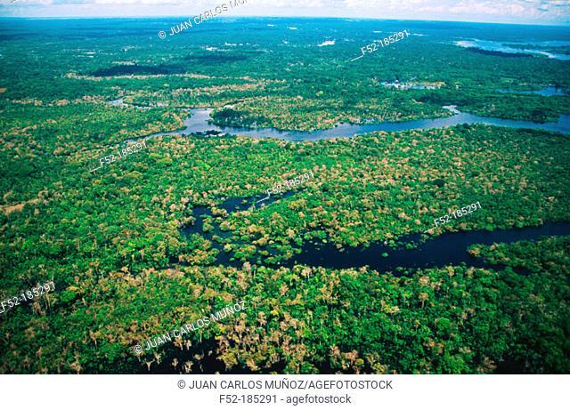 Tropical forest. Amazon area. Brazil