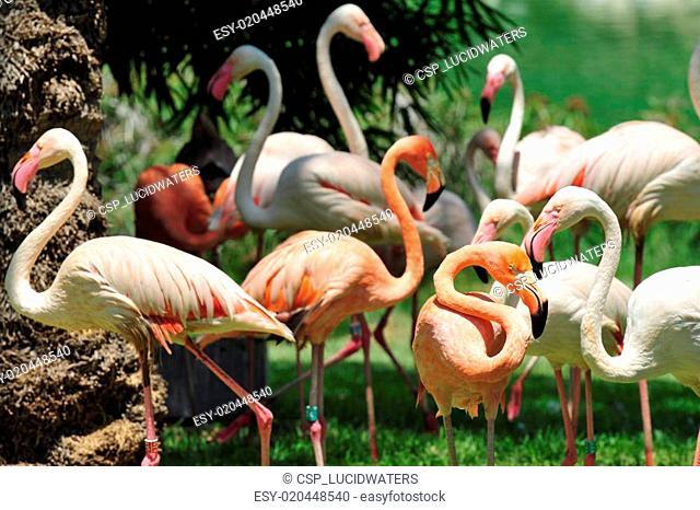 Jerusalem Biblical Zoo