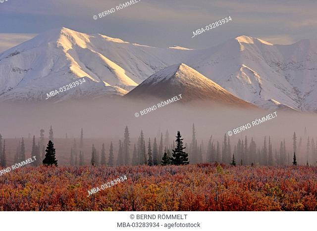 North America, the USA, Alaska, Denali National Park, Alaska Range, tundra, blueberry bushes
