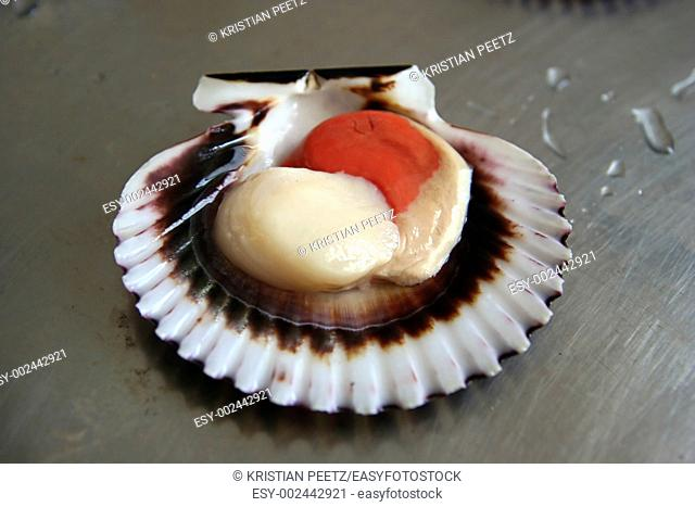 Fresh sea scallop getting ready to be prepared :-