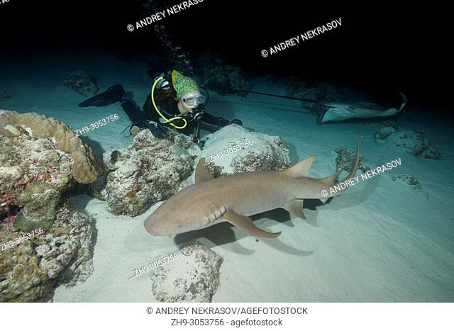 Female scuba diver looks at shark in the night. Tawny nurse shark, Giant sleepy shark or Madame X (Nebrius ferrugineus)