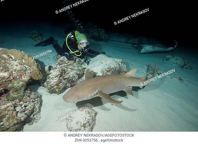 Female scuba diver looks at shark in the night. Tawny nurse shark, Giant sleepy shark or Madame X (Nebrius ferrugineus)