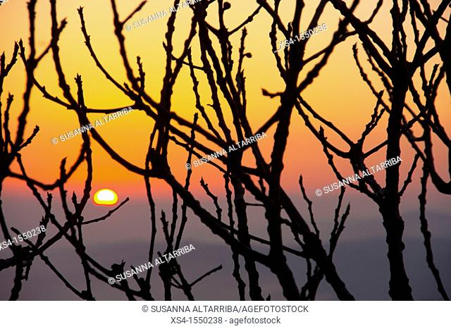 Sunrise behind a fig tree in a clear spring morning.Photo taken in Pinós, Lleida, Catalonia, Spain, Europe